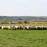 ayudas para que agricultores y ganaderos