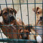 Centro Protección Animal Parla