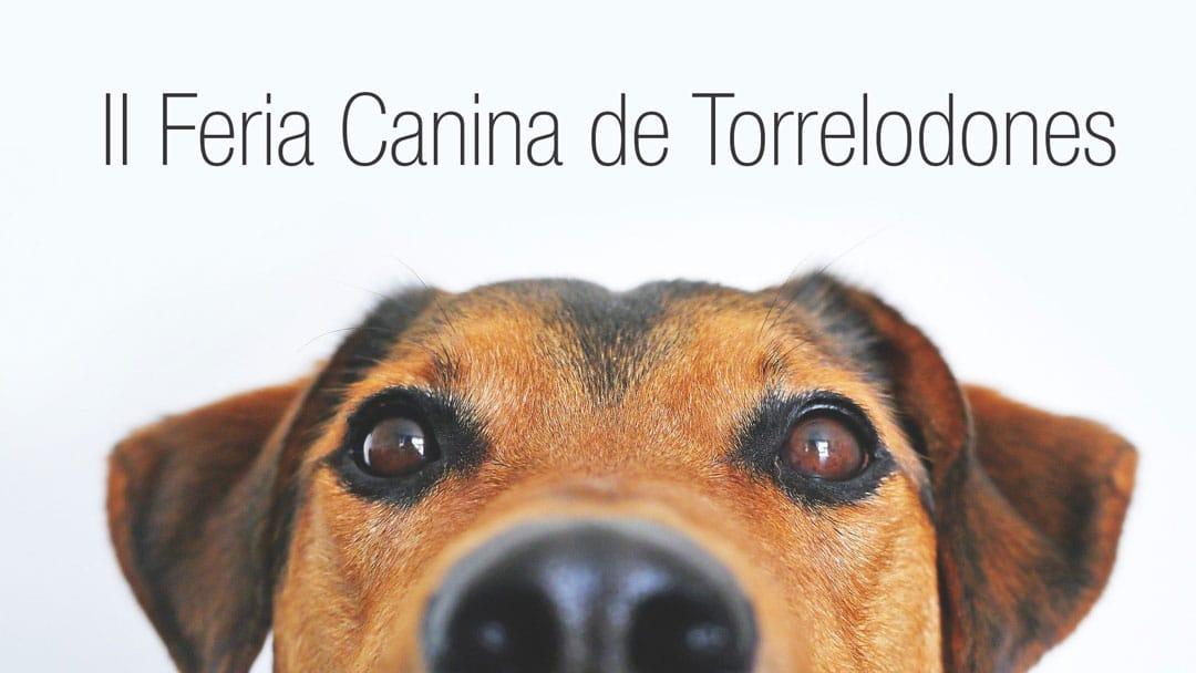 Feria Canina Torrelodones